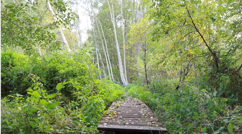 Le sentier de découverte de la Réserve des étangs de Bonnelles.  © M'Essonne