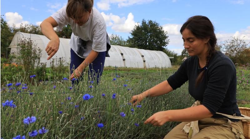 L'Enracinée accueille parfois des stagiaires, comme Charlotte, cet été, étudiante à L'institut du renouveau de l'herboristerie. © M'Essonne