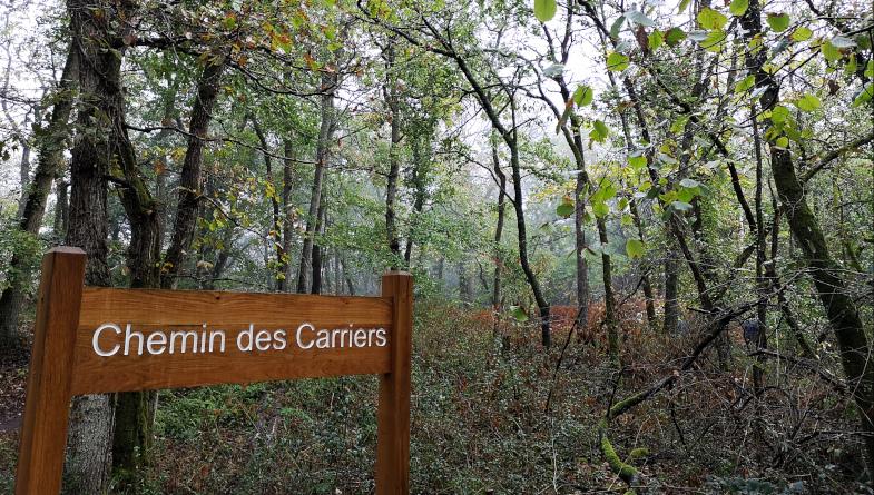 Le chemin des carriers, forêt départementale de la Barre. Photo LC-M'Essonne