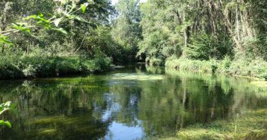 L'Essonne dans le Gâtinais. Photo LC-M'Essonne