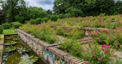 Les rosiers du parc Boussard à lardy. Photo ©Christophe Bertolin
