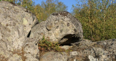 Les formes fantasmagoriques des blocs de grès à la forêt des Grands Avaux de Champcueil. Photo LC- M'Essonne