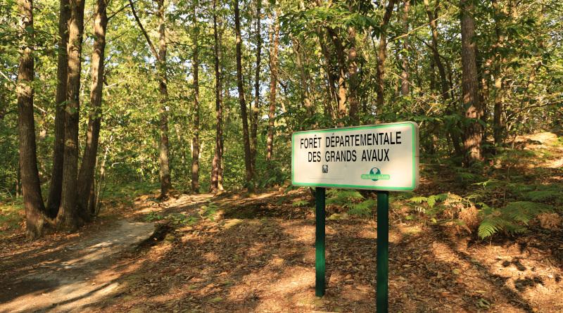 Le massif forestier comporte plusieurs sentiers balisés. Photo LC-M'Essonne