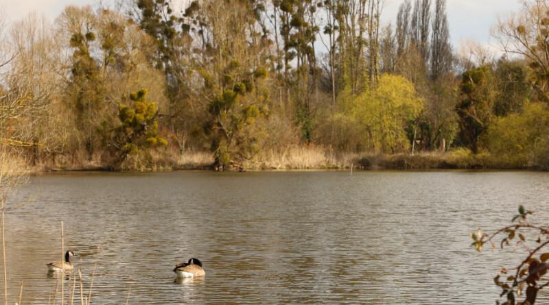 Les marais d'Itteville. Photo LC - M'Essonne