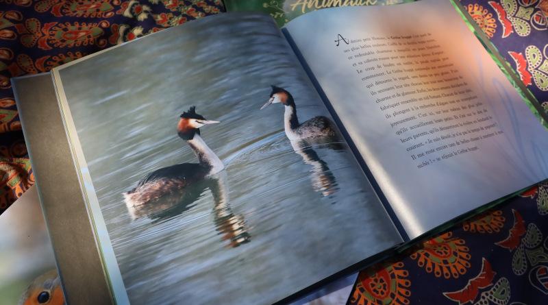 Aurélien Petit est l'auteur des photos animalières, prises sur le vif. Photo LC-M'Essonne