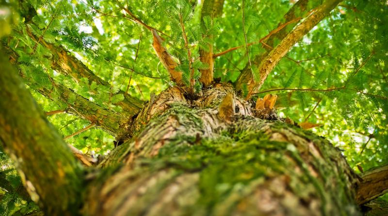 Autre nouveauté : une balade en forêt avec La compagnie des Hommes. Photo (c) Michael Gaida