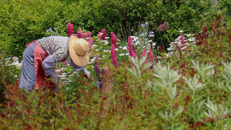 illustration jardinier nature fleur
